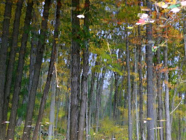 Neal  Eslinger - Forest Reflection