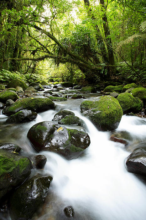 Forest Stream Print by Les Cunliffe