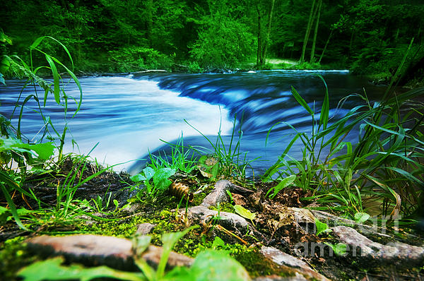 Forest Stream Running Fast Print by Michal Bednarek
