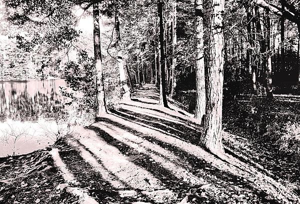 james kelleher path of light pdf