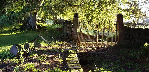Malcolm Suttle - Forgotten Garden