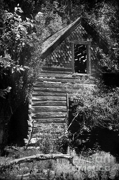 Forgotten Log Cabin Print by Cindy Singleton