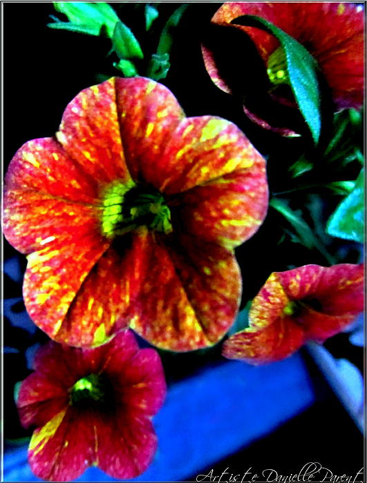 Fortinos Petunias Print by Danielle  Parent