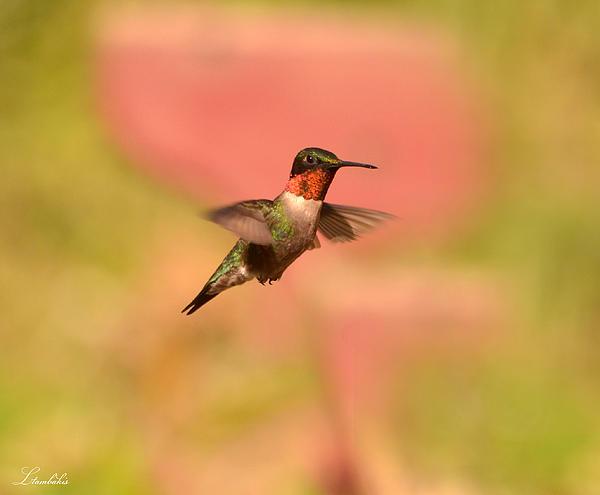 Free As A Bird Print by Lori Tambakis