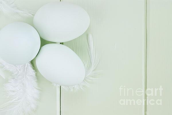 Fresh Ameraucana Eggs And Feathers Print by Stephanie Frey