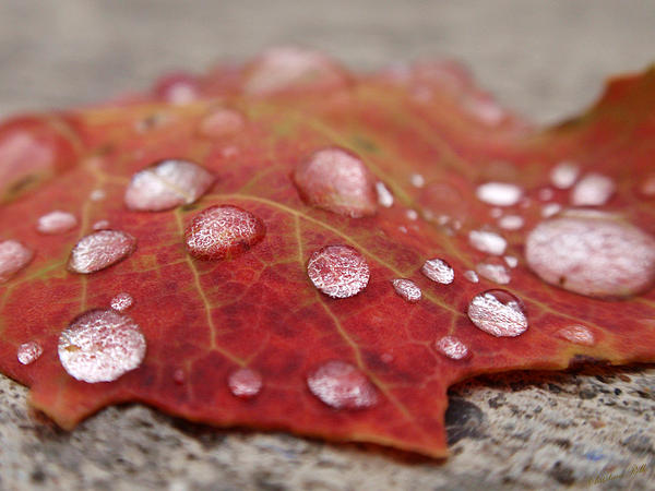 Fresh Drops Print by Christina Rollo