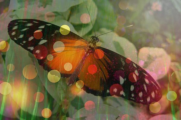 Shirley Sirois - Friend Butterfly