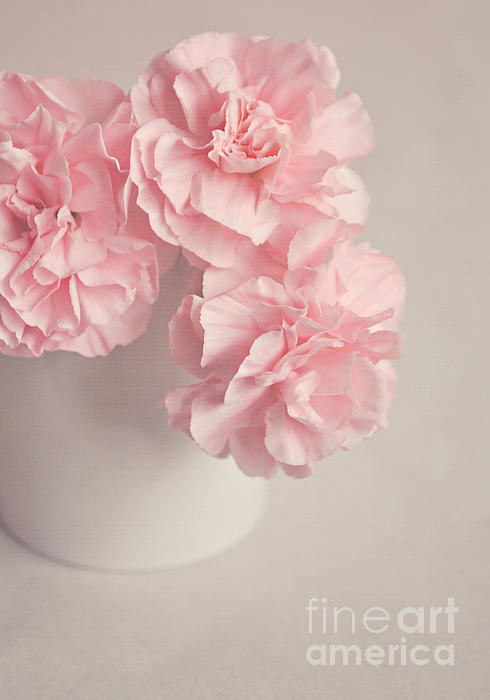 Frilly Pink Carnations Print by Lyn Randle