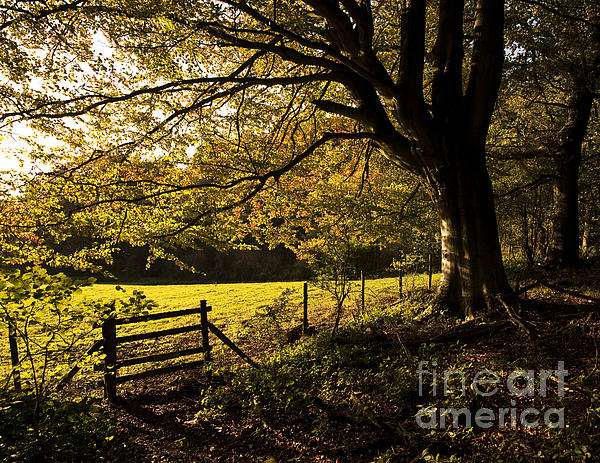 From Woods To Fields Print by Anne Gilbert
