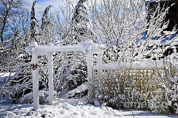 Front Yard Of A House In Winter Print by Elena Elisseeva