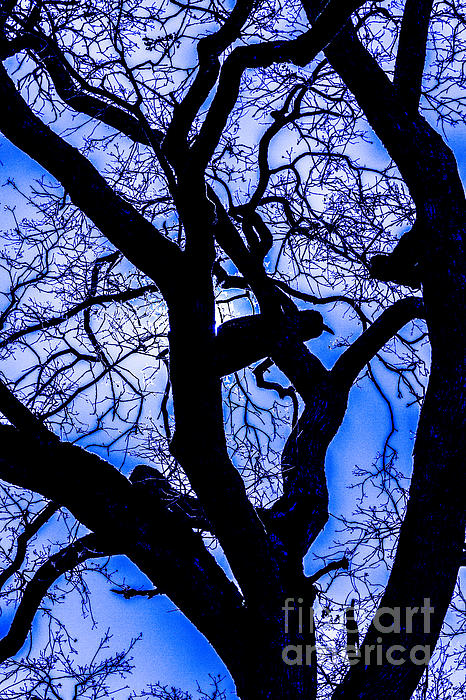 Frosty Blue Abstract Print by Mitch Shindelbower