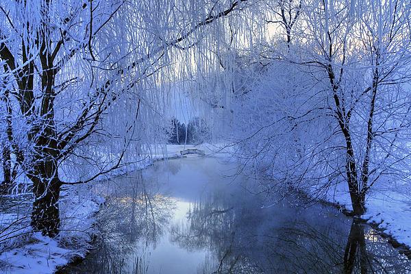 Frosty Morn Print by Dan Myers