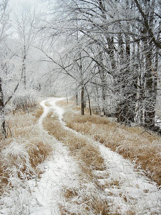 Penny Meyers - Frosty Trail
