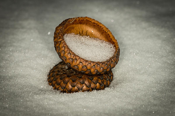 Paul Freidlund - Frozen Acorn Cupule