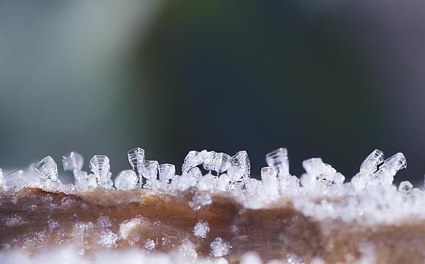 Frozen City Print by Shelby Waltz