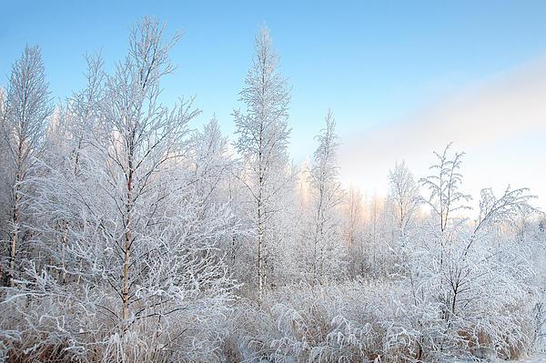 Frozen December Print by Ari Salmela