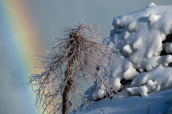 Frozen Tree Print by Tracy Munson