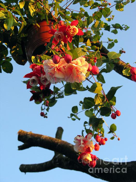 Ausra Paulauskaite - Fuchsia At Sunset