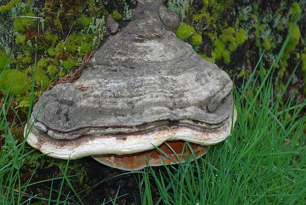 Fungus Among Us Print by Keith Nichols