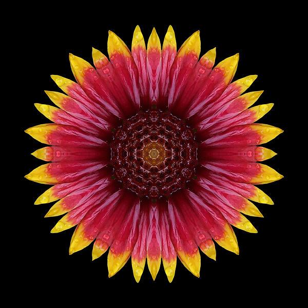 Galliardia Arizona Sun Flower Mandala Print by David J Bookbinder