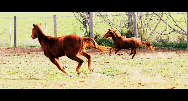 Galloping Horses Print by Arie Arik Chen