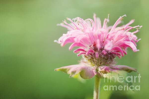 Garden Jester Print by Reflective Moments  Photography and Digital Art Images