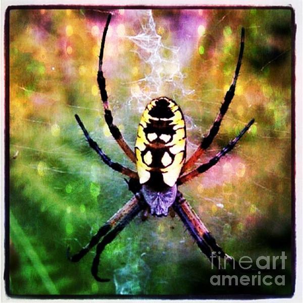 Garden Spider Print by Christy Bruna