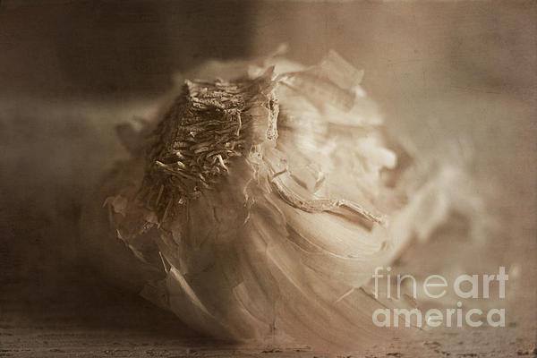 Garlic 1 Print by Elena Nosyreva