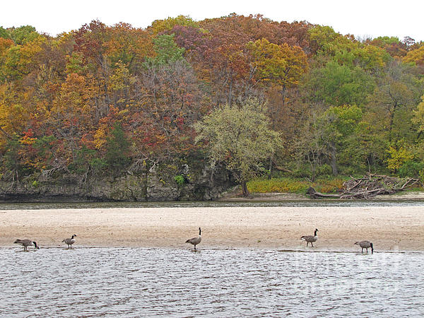Minding My  Visions - Geese On The Beach During Autumn