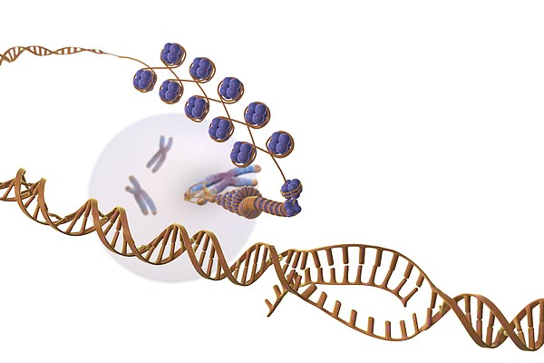 Gene Expression, Artwork Print by Science Photo Library