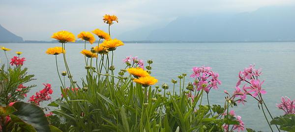 Geneva Flowers Print by Teresa Tilley