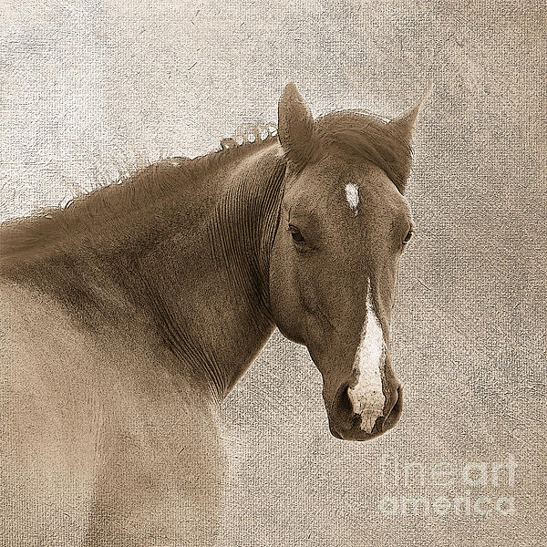 Gentle Devotion Print by Betty LaRue
