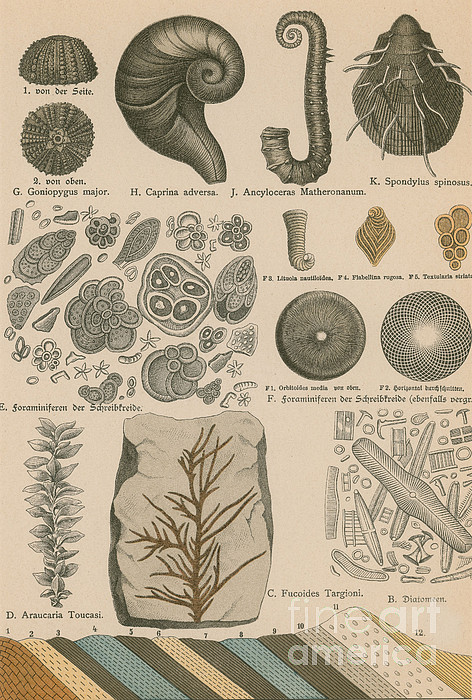 Geology And Paleontology 1886 Print by Science Source