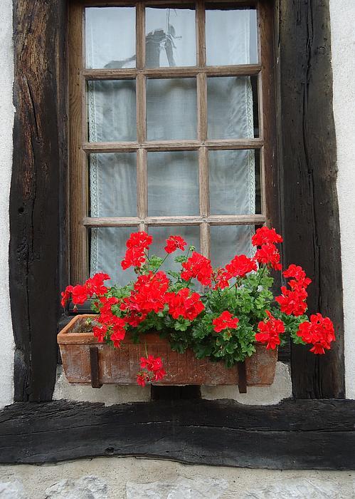 Barbie Corbett-Newmin - Geraniums in Timber Window