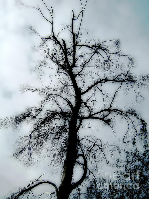 Bedros Awak - Ghost Tree
