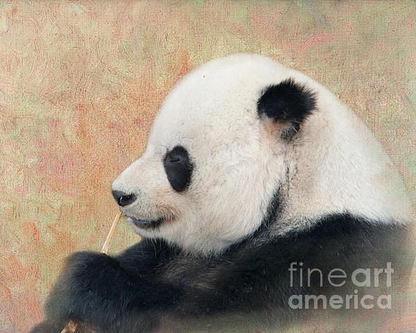 Giant Panda Print by Betty LaRue