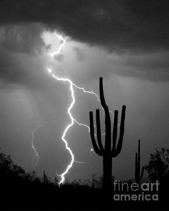 Giant Saguaro Cactus Lightning Strike Bw Print by James BO  Insogna