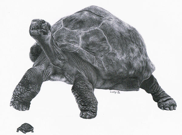 Giant Tortoise Print by Lucy D