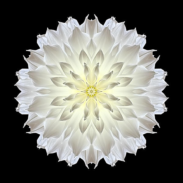 Giant White Dahlia Flower Mandala Print by David J Bookbinder
