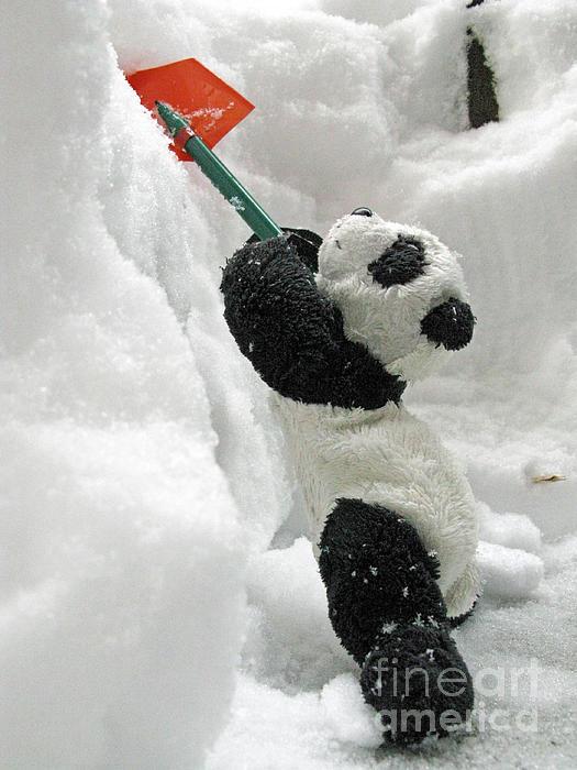 Ginny The Baby Panda In Winter #01 Print by Ausra Paulauskaite