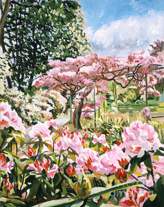 Giverny Rhododendrons Print by David Lloyd Glover