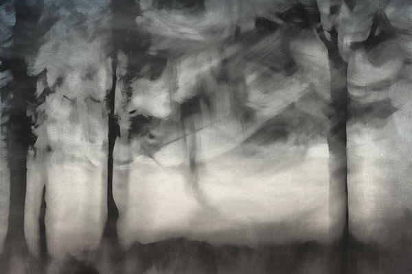 Glimpse Of Coastal Pines Print by Carol Leigh