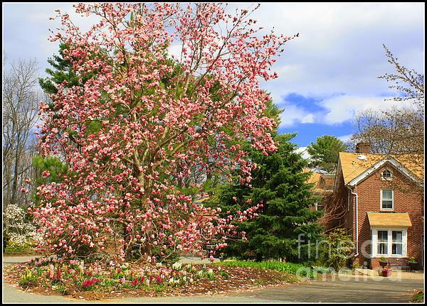 Glimpses Of Spring Print by  Photographic Art and Design by Dora Sofia Caputo