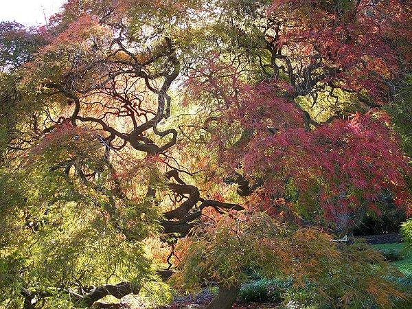 Rick Todaro - Glorious tree in the Arboretum