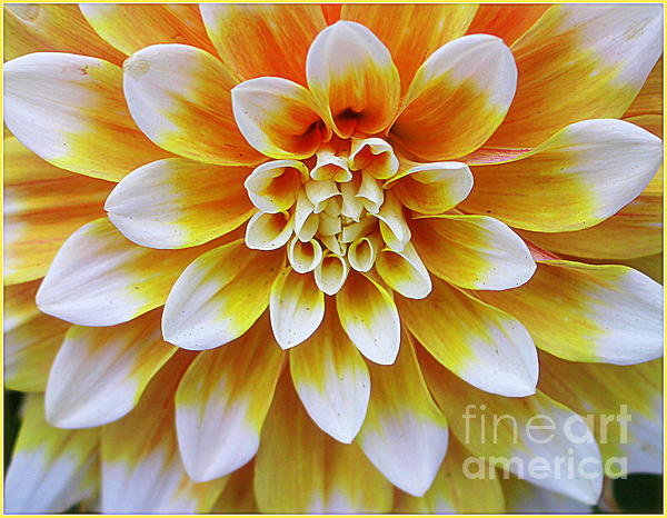 Glowing Dahlia Print by  Photographic Art and Design by Dora Sofia Caputo
