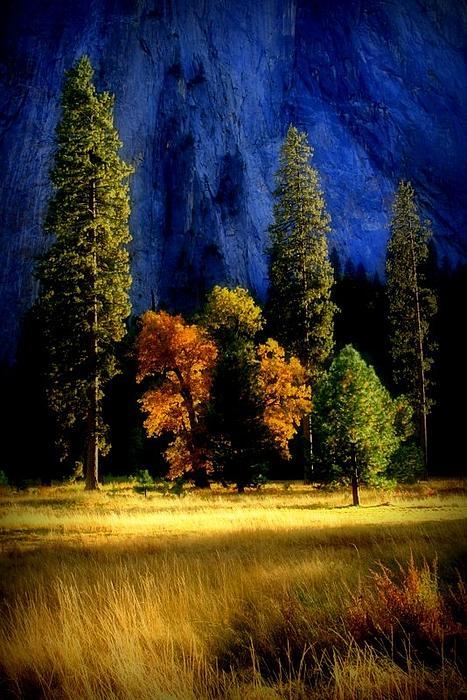 Glowing Trees Print by Lynn Bawden