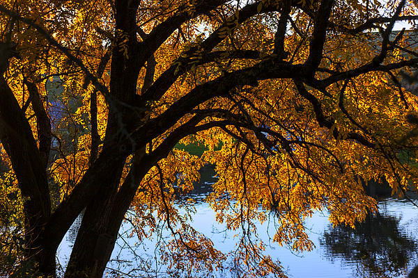 Golden Autumn Leaves Print by Garry Gay