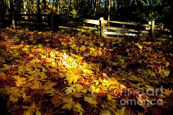 Golden Autumn Leaves Print by Graham Foulkes