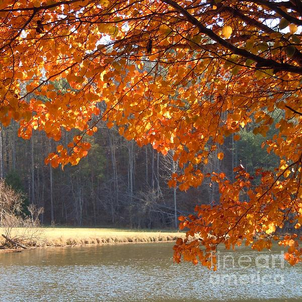 Golden Canopy Print by Pauline Ross