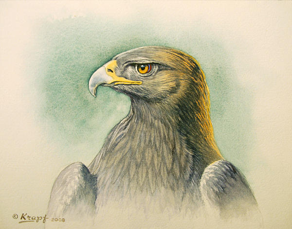 Golden Eagle Portrait Print by Paul Krapf